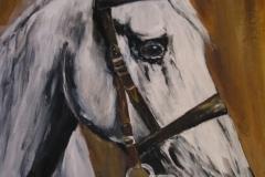 Pferd-Schimmel-öl