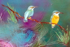 otto-symbiose-Eisvögel